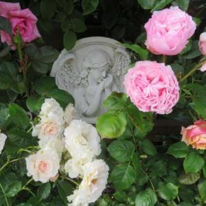***ヽ(^o^)丿やっと到着!海外からの裏庭作りの雑貨&開花を始めたアジサイ達