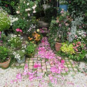 ***(*´▽`*)今週の裏庭作り『板壁編』&2日間続いた雨の後のツルバラの花殻