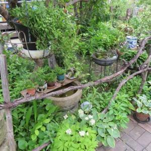 ***(´▽`)心落ち着く姉の庭と母の事&小物使いで楽しみながらランクアップする庭
