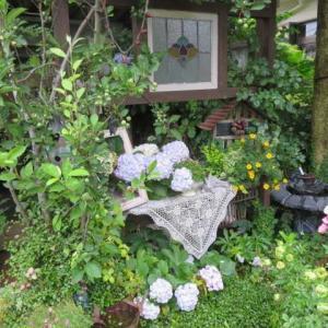 ***(´▽`)アジサイで移り行く庭&サントリーの花苗がほんとすごい!