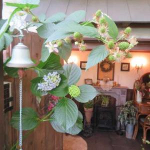 ***(^O^)/ワクワクするプクプク膨らむ果実たち&ドキドキものの始対面お花