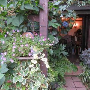 ***(*^_^*今一番のお気に入りの場所&アーチのブルームーンの開花とサブの事