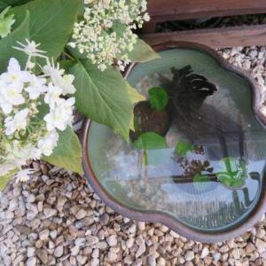***(*'▽')涼を呼ぶ水生植物&見切り品を使って素敵に演出してみた!