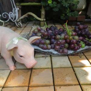 ***( *´艸`)今年もばぁばのシソ梅干し作り&またやられてブドウの収穫