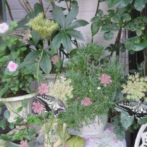 ***(^_-)-☆眠ってたお宝で格をあげる&モサモサのフロントの庭をスッキリと!