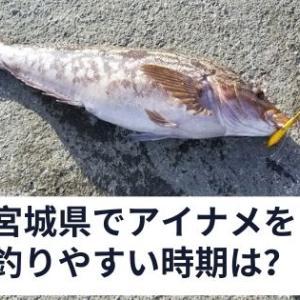 宮城県でアイナメを釣りやすい時期は?水温によるルアーを選択する考え方も紹介