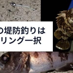 宮城県で真冬に堤防で釣りをしたいならメバル一択?嬉しいゲストも登場!
