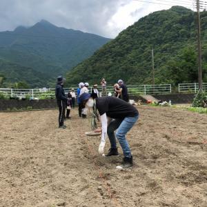 自然たっぷりの環境で枝豆作り