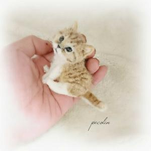茶トラ白の子猫完成です😊