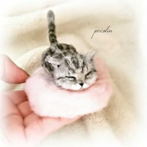 今回はアメショの子猫☺️