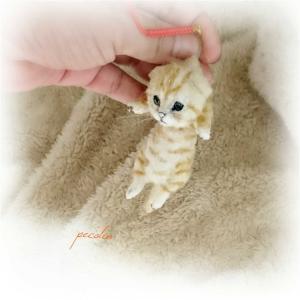 スコティッシュフォールドの子猫完成☺️