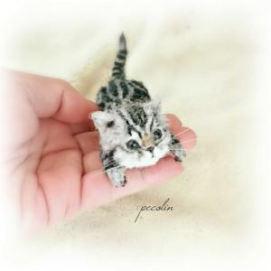 アメショの子猫完成🙂