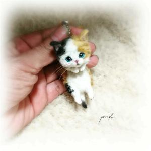 三毛猫の子猫です☺️