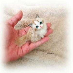 極寒地域の猫ちゃん……です☺️