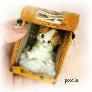 今日の豆猫はスコティッシュ☺️