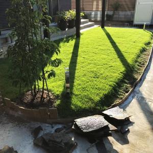 庭に芝とサブシンボルツリーを植えました