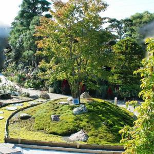 築山に植えた苔の紹介
