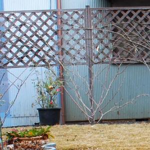 つるバラ用フェンスの設置
