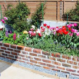 4月中旬の我が家の庭