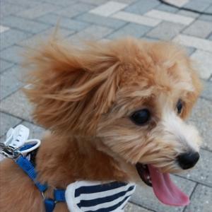 犬の散歩〜風にふかれて〜