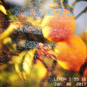 カゴシマ・タンジェリン: Lemon (2017) - まもなく閉店のお時間でございます。