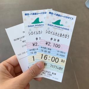 八景島シーパラダイスで念願の「シロイルカ」と遊んできたよ!