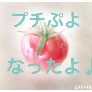 【ベランダ野菜】プランターのプチぷよが実ったよ♪