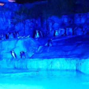 【日本平動物園】夜の動物園(ナイトズー)ってどんな感じ?「後編」