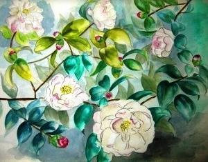 山茶花を描く