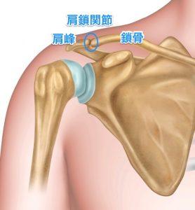 【詳しい人求む】筋トレやってたら左肩痛めてしまってさ…