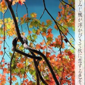 秋に恋する色