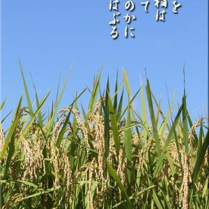 令和2年度農産物検査員出発式(JAいわて平泉)