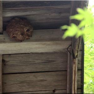 我が家の蜂の巣