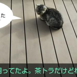 台風と、飼い犬の思い出