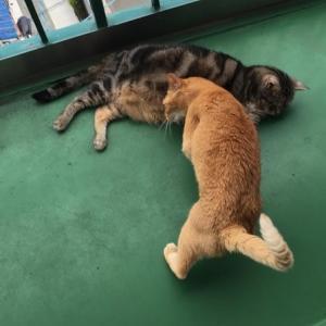 猫たちだけで長期のお留守番⑥:日本への入国制限が解除されない