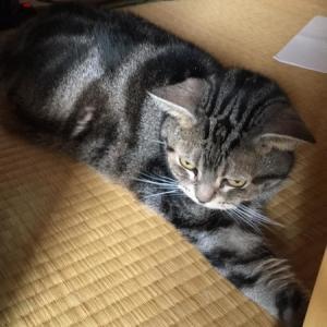 猫たちだけで長期のお留守番⑫:猫のリンパ腫
