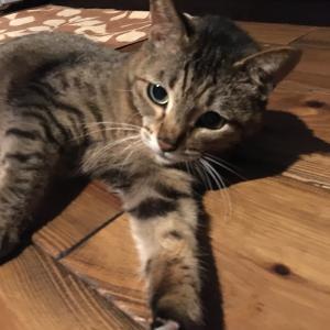 シニア猫のお食事事情