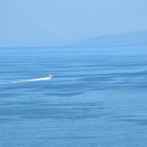 2020.08.02 船活 熱海港でジェットフォイルを撮影