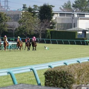 【競馬】阪神競馬場 OP 若葉S