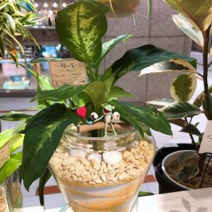 お祝いの贈り物に最適!カラーサンドデザインの観葉植物