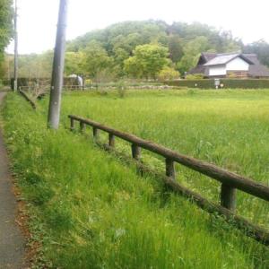 『トトロの風景』?「都立野山北・六道山公園」に行ってきました~!里山と森林浴とアスレチックと温泉を一度に満喫!
