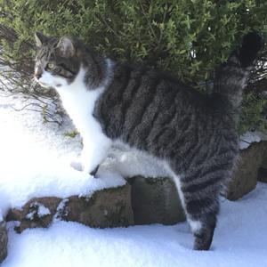 雪・猫・豚