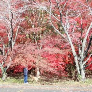 11月11日より14日3泊の広島NO1