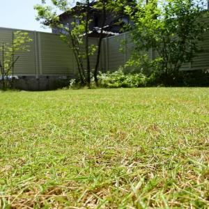 芝生の手入れをしましたよ