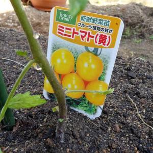 庭の畑に苗を植えました
