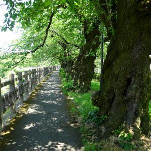 緑の径を歩きました