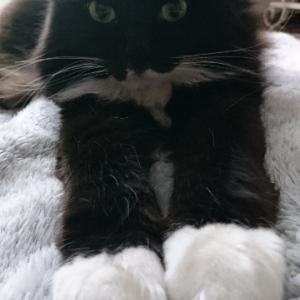猫と放射線の関係性 Relationship between cat and radiation