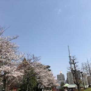 4月になりましたね(#^.^#)