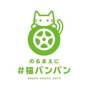 猫バンバン 運動を知っていますか?