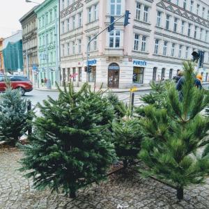 クリスマスツリー売ってます。
